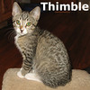 Thimble was adopted from the Cat House and Adoption Center on Saturday October 1, 2011.<br /> <br /> Thimble<br /> <br /> Sew cute with her thimble overflowing with love. She's ready to protect you from the pointy things in life.