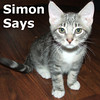 """Simon Says and London Bridges (siblings) were adopted from South Bay Veterinary Hospital.<br /> <br /> Simon Says<br /> <br /> Simon Says, """"Adopt me with my little twin and we will be the happiest buddies for life!"""" He is persuasive isn't he? (Not to mention a handsome sweetie!)"""