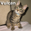 Poseidon and Vulcan (brothers) were adopted together from Steamboat Animal Hospital on Saturday August 13, 2011.