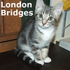 Simon Says and London Bridges (siblings) were adopted from South Bay Veterinary Hospital.<br /> <br /> London Bridges <br /> <br /> London Bridges is not falling down - but jumping up and over and all around! Inquisitive and smart, she is a furry package of kitten joy.