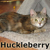 Huckleberry was adopted from the Cat House and Adoption Center on Saturday, September 10, 2011.