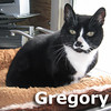 Gregory was adopted from the Cat House and Adoption Center on Sunday, September 18, 2011.<br /> <br /> Gregory<br /> <br /> A Refined Gentleman.<br /> <br /> Regal and proud, this handsome fellow is ready for his new home. Gregory's stability was shaken when he no longer had his home, family or sense of security in belonging.