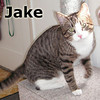 Jake was adopted from the Cat House and Adoption Center on Friday, September 9, 2011. <br /> <br /> Jake<br /> <br /> Gift to gab.<br /> <br /> Jake is full of life and would love to share yours with you. Young, active and seeking love and attention. If you need someone that needs you, Jake is your man.