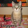 Timber and Logger (brothers) were adopted together from the Cat House and Adoption Center on Saturday October 1, 2011.<br /> <br /> Logger<br /> <br /> Hearty and strong. This guy is ready to be the man of the house but only after he's had plenty of lap time.