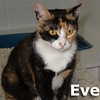 Eve was adopted from the Cat House and Adoption Center on Saturday, September 17, 2011.<br /> <br /> Eve<br /> <br /> She's gone AWOL and she's not even enlisted.<br /> <br /> Eve's former owner just left her without worrying. This darling little lady is just an overgrown kitten and still enjoying every day pleasures. She would welcome your visit and awaits her new forever home.