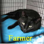 Farmer was adopted from the Cat House and Adoption Center on Thursday, August 25, 2011.