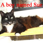 A Boy Named Sue was adopted from the Cat House and Adoption Center on Tuesday, July 26, 2011.