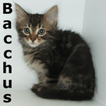 Bacchus and Diana (brother and sister) were adopted together from the Cat House and Adoption Center on Saturday July 30, 2011.<br /> <br /> Bacchus<br /> <br /> The life of the party and ready to roll. He is ready to take the party to your home where he will bring joy, laughter and good times for all.