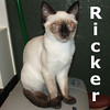 Ricker was adopted from the Cat House and Adoption Center on Saturday August 27, 2011.