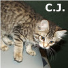 C.J. was adopted from the Cat House and Adoption Center on Saturday, September 17, 2011.