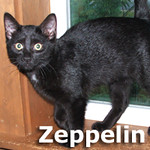 Zeppelin and Zenner (brothers) were adopted together from Steamboat Island Animal Hospital on Thursday, August 25, 2011.