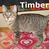 Timber and Logger (brothers) were adopted together from the Cat House and Adoption Center on Saturday October 1, 2011.<br /> <br /> Timber<br /> <br /> You can't have a logger without Timber! From his adorable curled ear to his big round eyes this guy will make you fall crown over trunk for him.