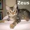 Colorado and Zeus were adopted together from Steamboat Animal Hospital on Saturday August 13, 2011.