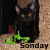 Sonday was adopted from Steamboat Animal Hospital on Saturday August 13, 2011.