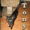 Tony was adopted from the Cat House and Adoption Center on Saturday, September 10, 2011.