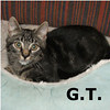 G.T. was adopted from the Cat House and Adoption Center on Saturday, September 17, 2011.