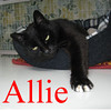 Allie was adopted from the Cat House and Adoption Center on Friday, August 5, 2011.