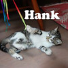 Hank was adopted from the Cat House and Adoption Center on Monday, September 26, 2011