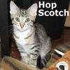 Zinger (male) and Hop Scotch (female) were adopted together from Steamboat Animal Hospital on Sunday August 28, 2011