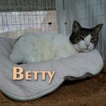 Betty was adopted from the cat house and adoption center on Sunday April 15, 2012.