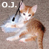 O.J. was adopted from his foster home at Steamboat Animal Hospital on Tuesday, May 22, 2012.