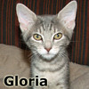 Gloria was adopted from her foster home at Hawks Prairie Veterinary Hospital on Friday, February 24, 2012.