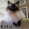 Katie was adopted from the Cat House and Adoption Center on Sunday, April 29, 2012.<br /> <br /> Katie<br /> <br /> Owner died, the home was empty...<br /> <br /> Bad luck doesn't last too long, and Katie is very thankful.  Because this special little lady has had more than her share of human losses in her life, we are surprised that she settled in so quickly and is ready and open for a new home.