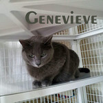 Genevieve was adopted from the Cat House and Adoption Center on Saturday March 31, 2012.