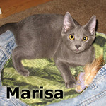 Marisa and Cowboy were adopted together from their foster home at Hawks Prairie Veterinary Hospital on Friday, February 24, 2012.