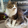Davy was adopted from the Cat House and Adoption Center on Tuesday, April 24, 2012.<br /> <br /> Davy <br />  <br /> King of the Wild Frontier!<br />  <br /> Still wearing his coon-skinned hat but all the myths and legends aside, this very handsome boy is full of life and enjoying all the attention he can get.  He is young, full of energy and will provide hours of free entertainment.