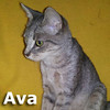 Ava was adopted from the Cat House and Adoption Center on Saturday May 26th, 2012.