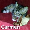 Carmen and Franklin were adopted together from the Cat House and Adoption Center on Saturday, May 26th, 2012.