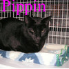 Leo and Pippin were adopted from the Cat House and Adoption Center on Sunday, May 6, 2012.