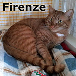 Firenze and Kairi (Barley and Gladys) were adopted together from the Cat House and Adoption Center on Saturday, February 25, 2012.