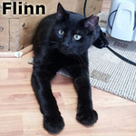 Flinn was adopted from the Cat House and Adoption Center on Easter Sunday, April 8, 2012.