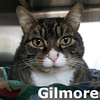 Chessie and Gilmore got adopted from the Cat House and Adoption Center on Sunday (Mother's Day), May 13, 2012.<br /> <br /> Gilmore<br /> <br /> Happy Gilmore<br /> <br /> Content to snuggle on a comfy blanket or in loving arms. It does not take a lot to make Gilmore a happy cat. He is a gentle and handsome fellow waiting patiently to meet you.