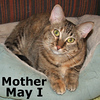 Mother May I and Gramma were adopted at the Cat House and Adoption Center on Saturday, March 17, 2012.<br /> <br /> Mother May I<br /> <br /> Yes, you may ...<br /> <br /> Yes, you may visit and admire me. Yes, you may scratch behind my ears and under my chin. Yes, you may comb me to make me look more beautiful and ... Yes, you may adopt me if you promise to give me lots of love.