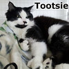 Tootsie was adopted from the Cat House and Adoption Center on Sunday, April 29, 2012.<br /> <br /> Tootsie<br /> <br /> Tip-toe, through the Tulips.<br /> <br /> Purrsonality plus and charm to spare.  Young and playful and ready to join a family and show off her talents and share her beauty.