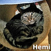 Hemi was adopted from the Cat House and Adoption Center on Saturday, February 25, 2012.