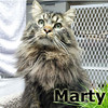 Marty was adopted from the Cat House and Adoption Center on Saturday, May 12, 2012.<br /> <br /> Smart Marty<br /> <br /> Loving life and resting up for his new opportunity that he hopes will be knocking soon. Pawing at a window didn't end up working into a home, but it did get him out of the weather and into where he awaits his new visitors.