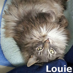 Louie was adopted from the Cat House and Adoption Center on Saturday, April 28, 2012.<br /> <br /> Louie<br /> <br /> Louie – Louie!<br /> <br /> Large and lovable and ready to find that special home where he can relax and rejoice. After living outside and relying on handouts, Louie desires the life of luxury and we believe he deserves, you will too.