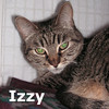 Izzy and Lola (sisters) were adopted together from the Cat House and Adoption Center on Saturday March 31, 2012.