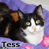 Tess was adopted from the Cat House and Adoption Center on Saturday, May 26th, 2012.<br /> <br /> Tess<br /> <br /> Tessie Lucille.<br /> <br /> Sweet, loving and talkative. Tess will bring a sense of new life to your home and her beauty will follow her from room to room. Warmth, joy and happiness will follow her through your home.