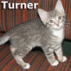 Turner and Tina (siblings) were adopted together from the Cat House and Adoption Center on Saturday, September 22, 2012.
