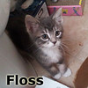 Floss was adopted from his foster home at Steamboat Animal Hospital on Wednesday, September 12, 2012.
