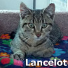 Lancelot  was adopted from the Cat House and Adoption Center on Saturday, September 15, 2012.