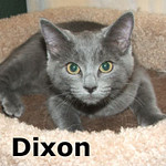 Chuckie and Dixon were adopted from the Cat House and Adoption Center on Saturday, September 9, 2012.