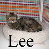 Lee was adopted from the Cat House and Adoption Center on Monday, October 8, 2012.