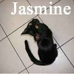 Jasmine was adopted from Steamboat Animal Hospital on Sunday, September 23, 2012.