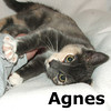 Agnes and Edith (sisters) were adopted from their foster home on Tuesday, October 30, 2012.<br /> <br /> Agnes<br /> <br /> All about me!<br /> <br /> Sweet and loving, this beautiful girl wants nothing more than to be the center of your life and surrounded by your love.